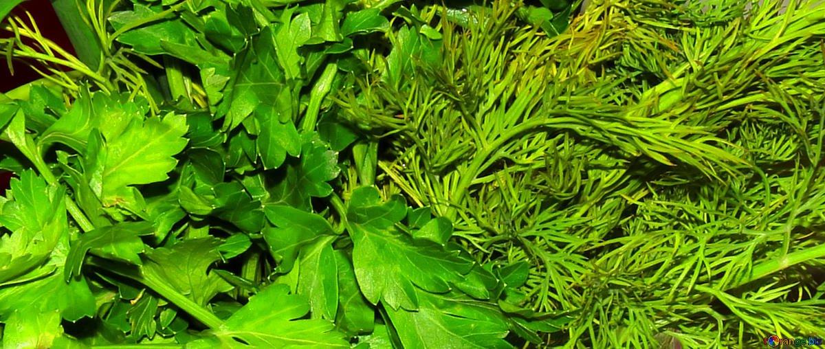 5 самых полезных видов зелени, которые можно вырастить даже дома - фото 1