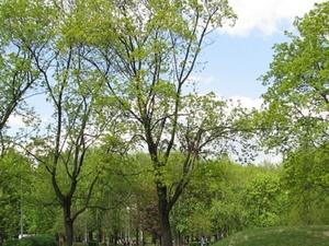 Парк «Горки» планируется создать в Нижнем Новгороде