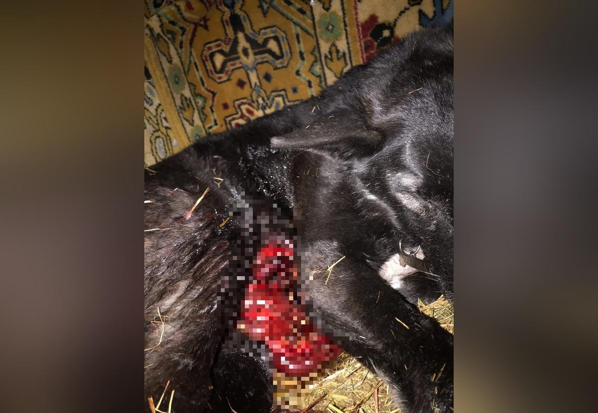 Догхантеры в Нижнем Новгороде: как обезопасить свою собаку - фото 2