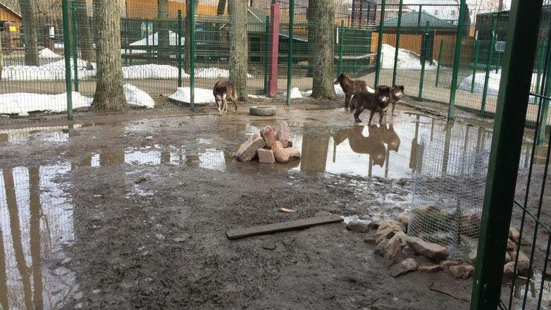 Вольер с волками затопило в балахнинском зоопарке - фото 4