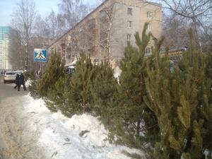 В Приокском районе незаконно продавали елки