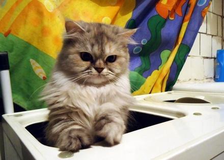 Какие домашние животные чаще всего вынуждают своих хозяев делать ремонт в квартире