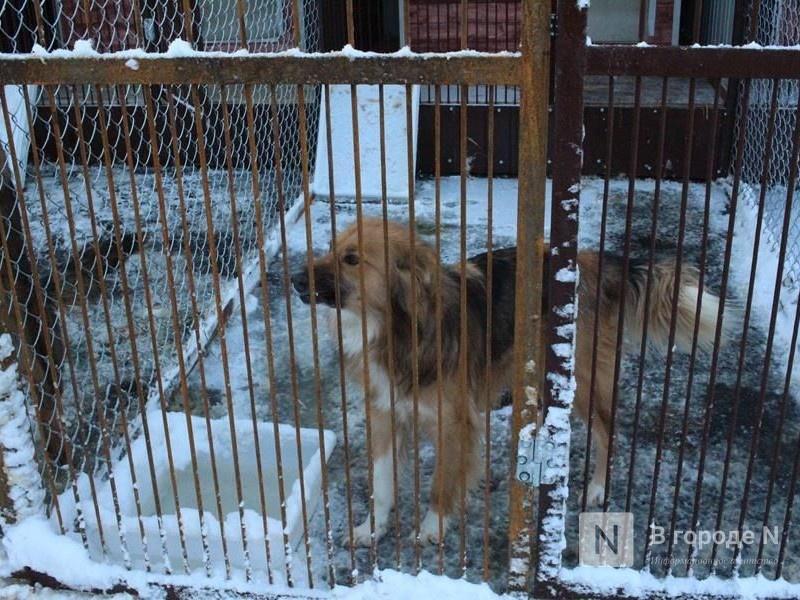 Обезвредить агрессивных собак пообещала кстовская администрация - фото 1