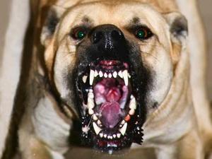 Хозяина напавшей на ребенка собаки на Бору оштрафовали почти на 20 тысяч рублей