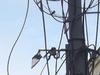 В Нижнем Новгороде подросток обгорел на проводах