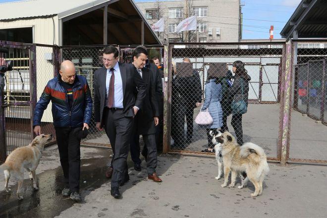 Власти Нижегородской области предлагают выпускать изприютов стерилизованных собак