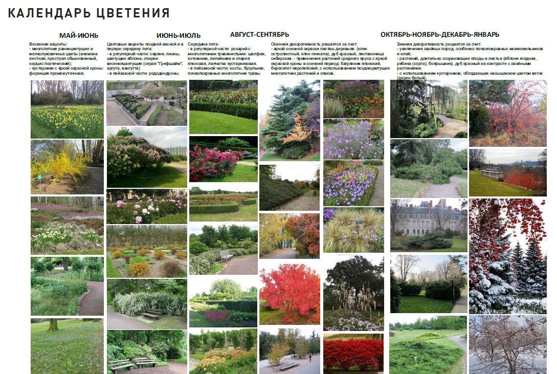 Возвращение легендарной «ракушки» и другие надежды Александровского сада - фото 14