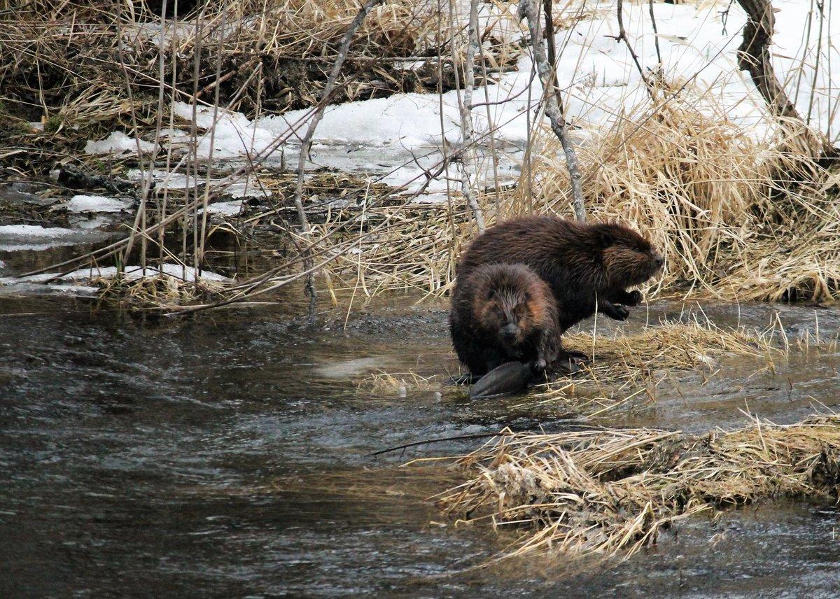 Эти животные вредят окружающей среде не меньше человека - фото 2